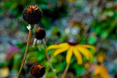 Richmond, Indiana - Whitewater Valley Gorge Park