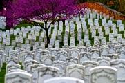Washington, D.C. - Arlington National Cemetery